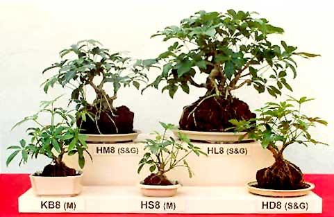 bonsai2002