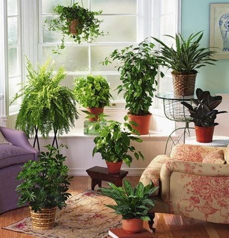 Trucos para regar las plantas