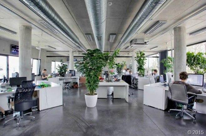 plantas-en-oficinas_thumb.jpg