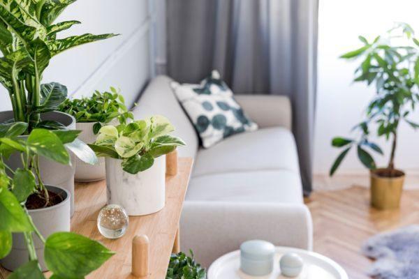 como-decorar-con-plantas-colgantes-istock3
