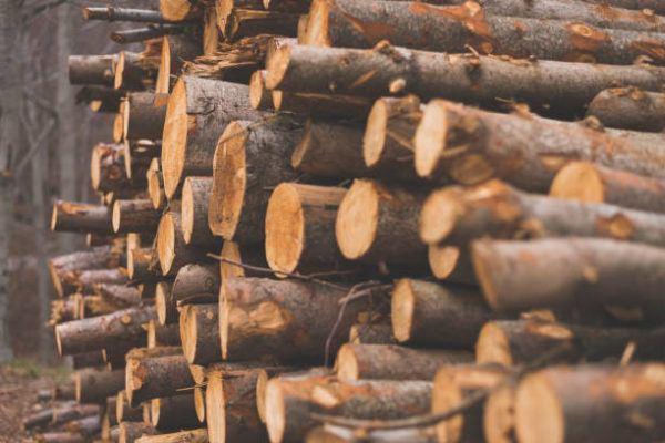 Como decorar con troncos de madera