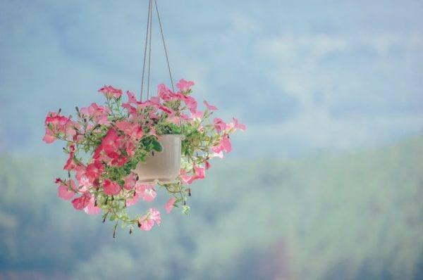 Flores en maceta colgante