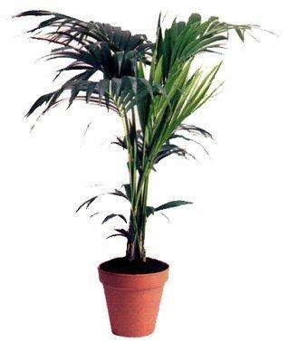 plantas-de-interior.jpg