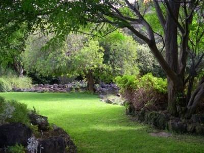 Los rboles en el jard n for Arboles para jardines pequenos