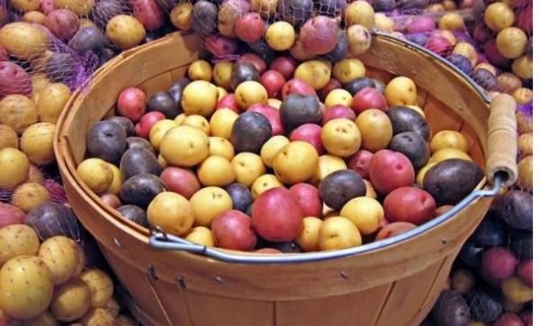 Resultado de imagen de papas canarias variedades
