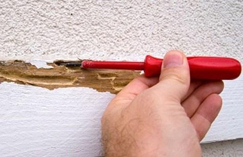 ¿Cómo eliminar las termitas?