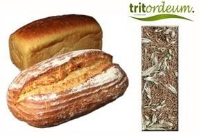 cereal-tritordeum-para hacer pan