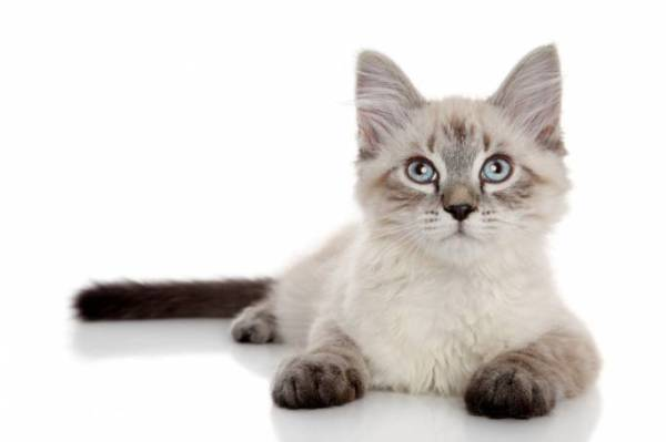 adiestrar-gato