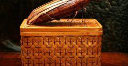 10 remedios caseros contra las cucarachas