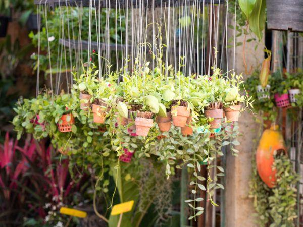 Decoracion De Jardines Pequenos 2018 Bloghogarcom - Jardines-pequeos-modernos