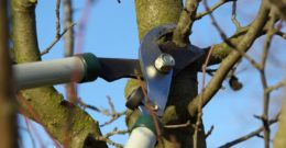 Cuidados básicos para podar jardín y árboles frutales