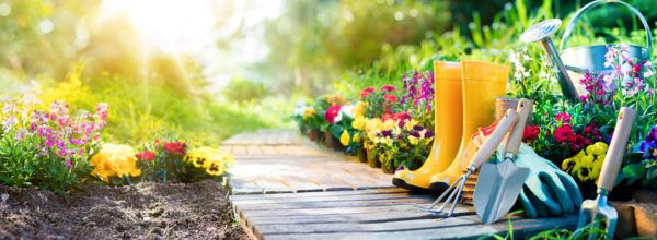 Cuidados jardin