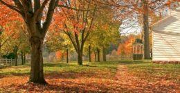 Cuidados del jardín durante la temporada otoño – invierno