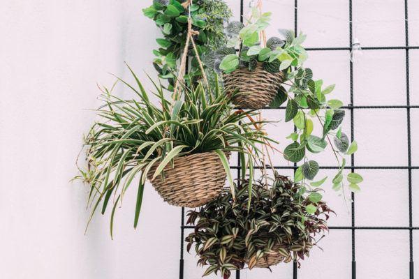 Colores que combinan con verde plantas