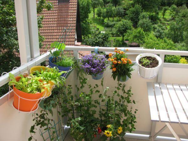 como-decorar-con-plantas-colgantes-istock2