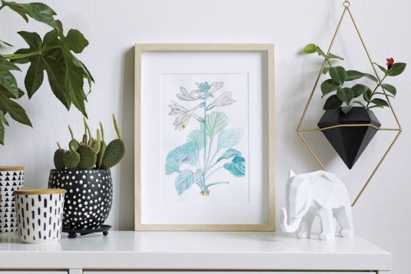 como-decorar-con-plantas-colgantes-istock4