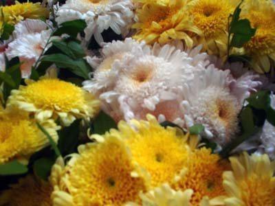 flores1.jpg