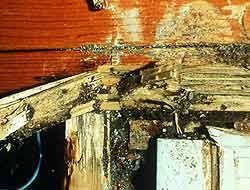 termitasreticulitermesmascomun_250×190.jpg